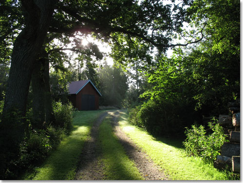 skogspromenad_2